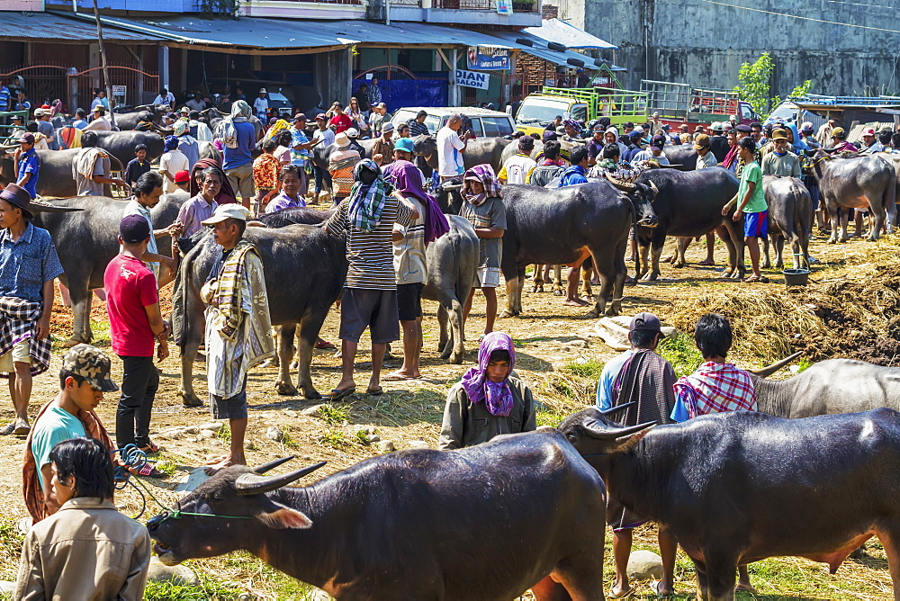 People and water buffaloes at the Bolu livestock market, Rantepao, Toraja Land, South Sulawesi, Indonesia