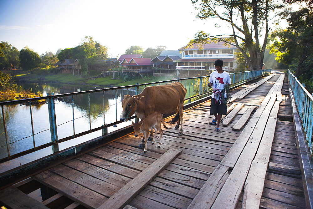 A local and his cow cross a bridge in this sleepy riverside town, Tad Lo, Laos
