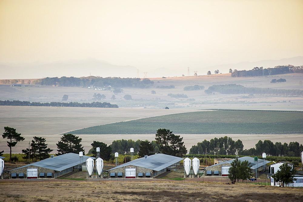 Farmland at dusk, Stellenbosch, Western Cape, South Africa