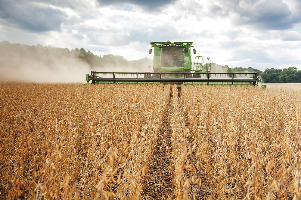 Soybean harvesting, Laytonsville, Maryland, United States of America