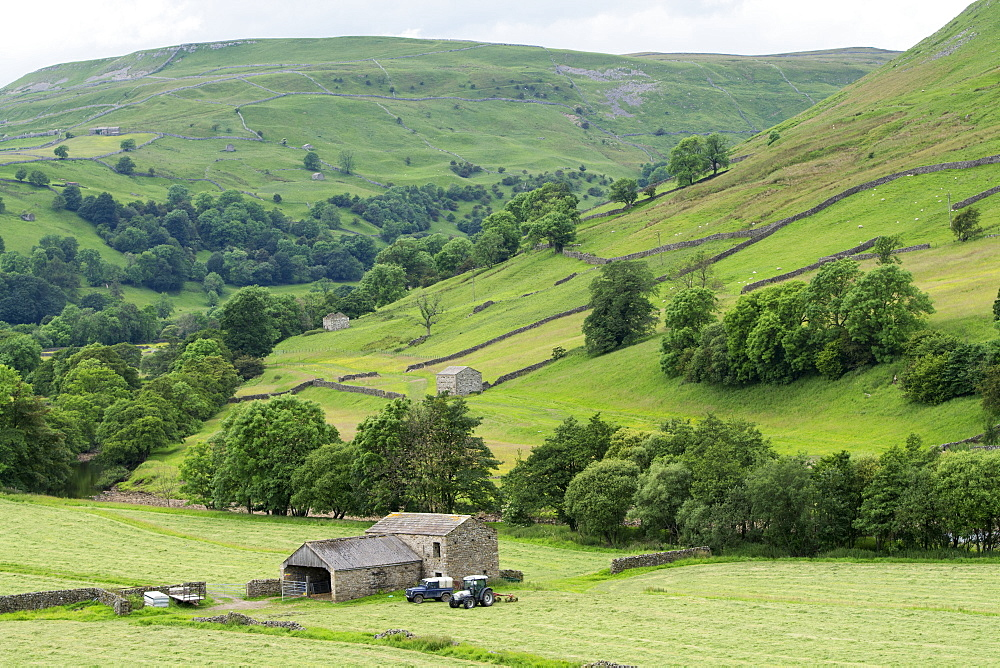 Haytime in early summer, Swaledale, North Yorkshire, England