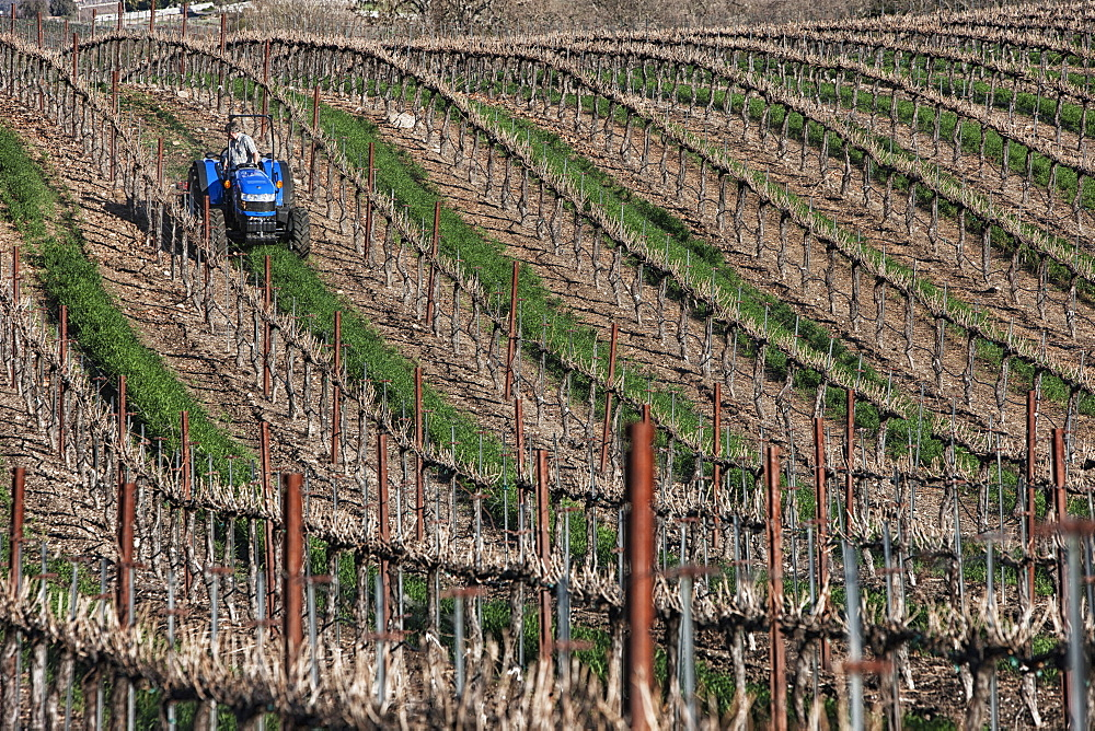 Mowing in a vineyard, Paso Robles, California, United States of America
