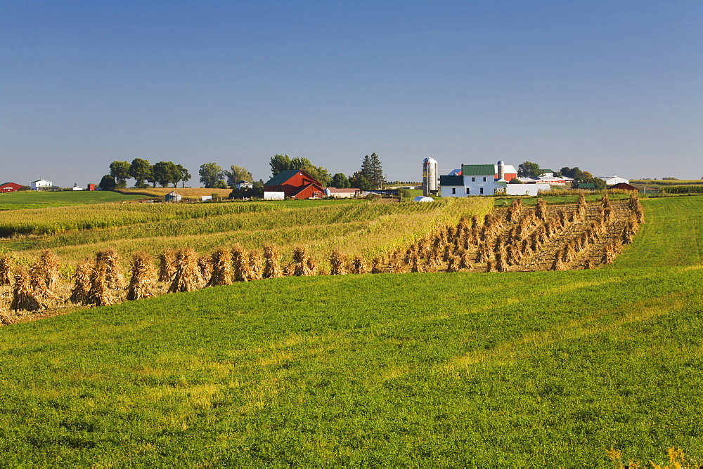 Corn shocks and an Amish farm, near Edgewood, Iowa, United States of America