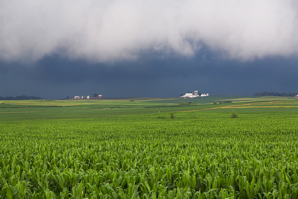 An approaching storm over a corn field near Strawberry Point, Iowa, United States of America