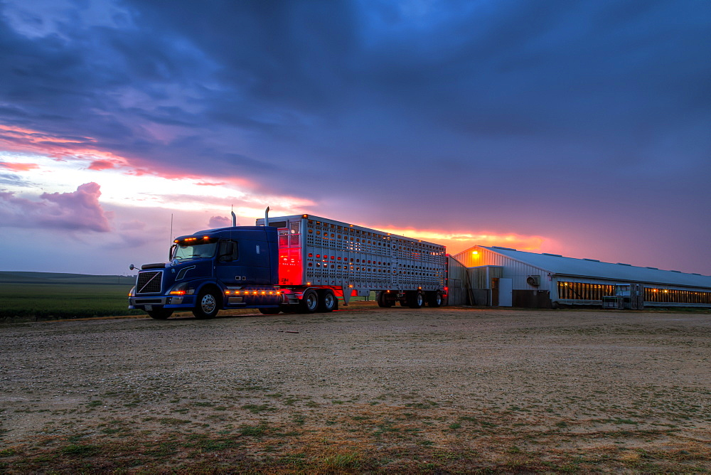 Livestock trailer backed up to a hog confinement building at dawn, near Edgewood, Iowa, United States of America