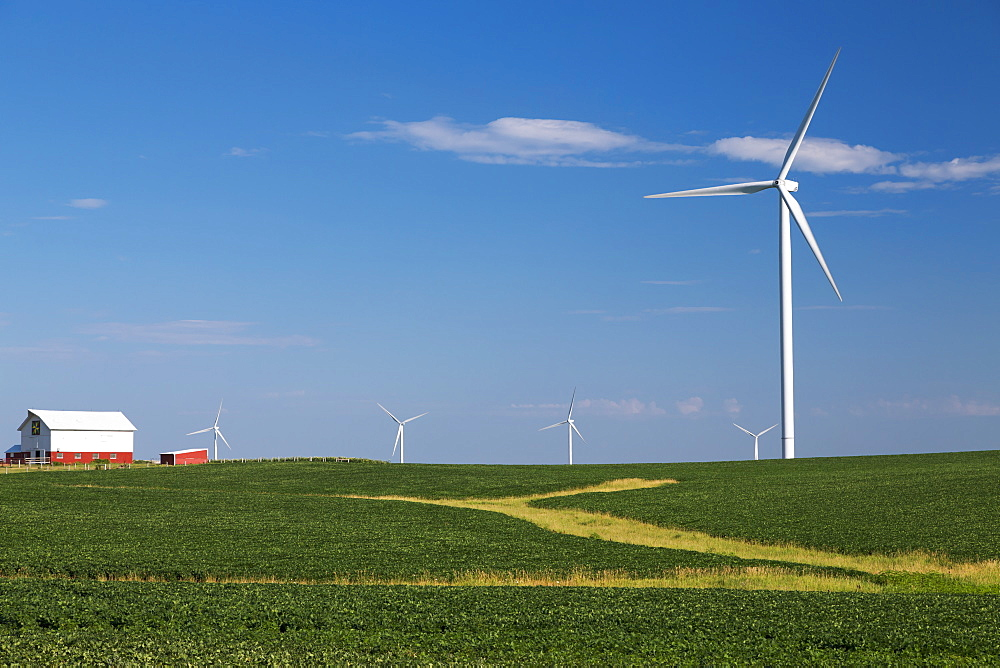 Wind turbines from the Elk Wind Energy Farm and a bean field with a barn in the distance, near Edgewood, Iowa, United States of America