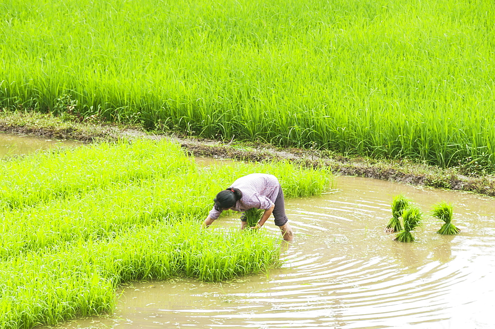 Rice fields and a farmer at work in a small village near to Wuyuan, Jiangxi province, China