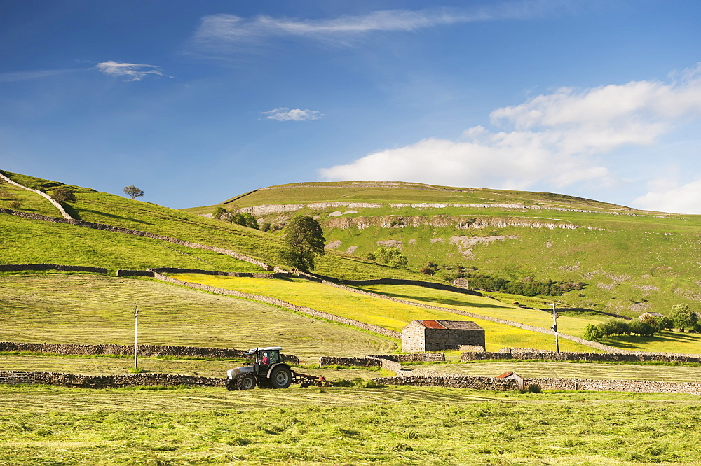 Haymaking in a traditional upland Dales hay meadow, Muker, North Yorkshire, England