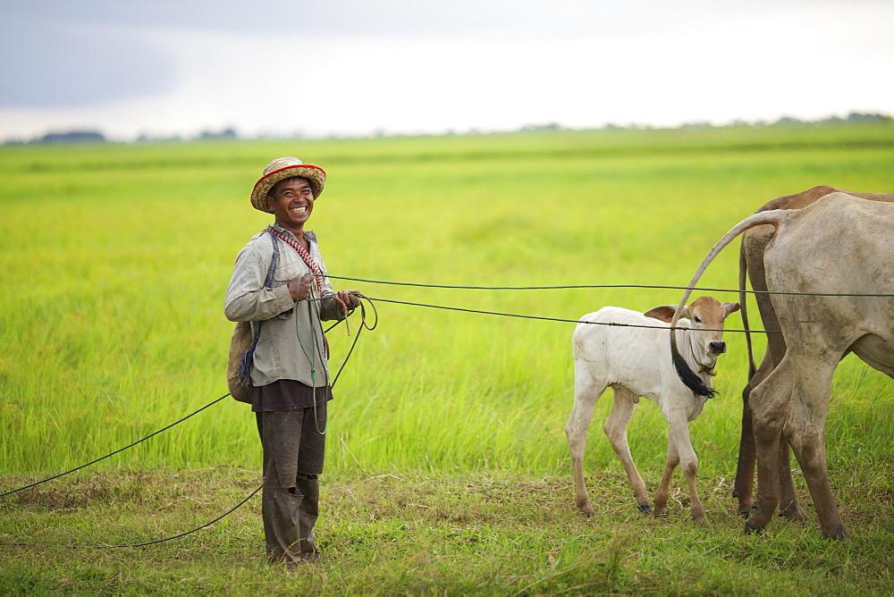 Man bringing in his cows, Battambang, Cambodia - 1116-39521