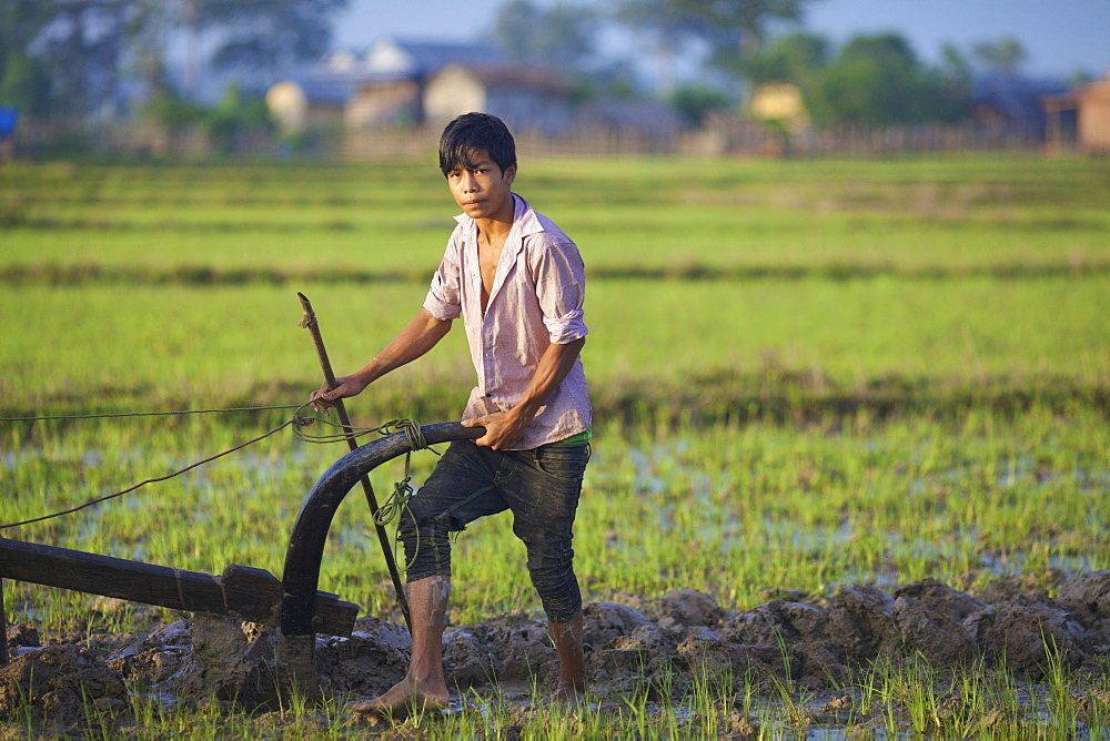 Bunong boy ploughing with Water Buffalo, Mondulkiri, Bangladesh