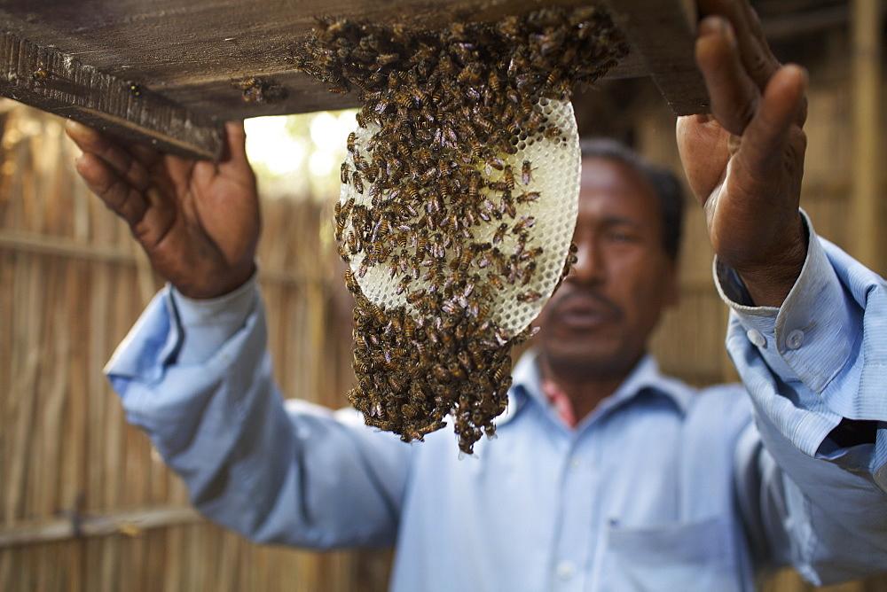 Beekeeper, Rangpur, Bangladesh