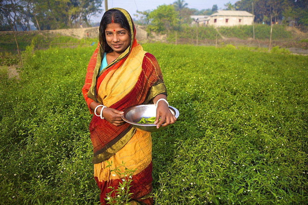 Woman picking vegetables, Kishoreganj, Bangladesh
