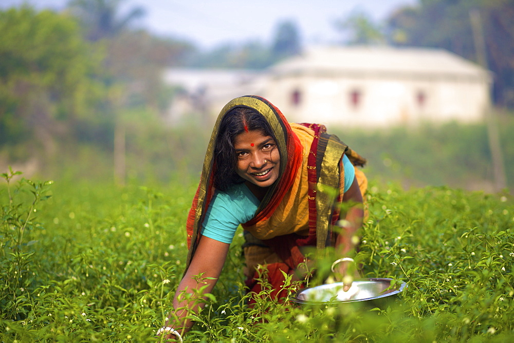 Woman picking vegetables, Kishoreganj, Bangladesh - 1116-39535