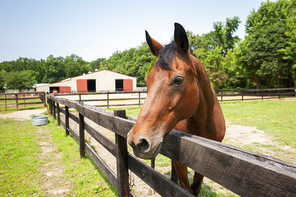 Horse looking over fence, St Michaels, Maryland, United States of America