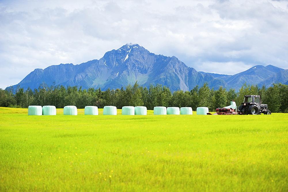Haylage on a farm, Palmer, Alaska, United States of America