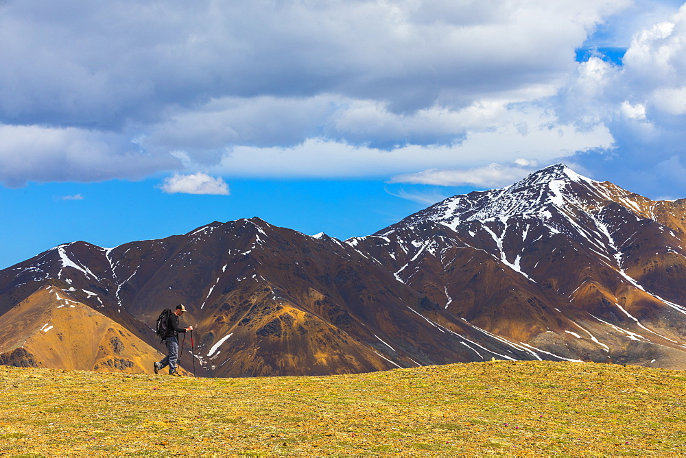 A backpacker hikes off-trail along the top of Stony Dome in Denali National Park in early summer; Alaska, United States of America - 1116-39578