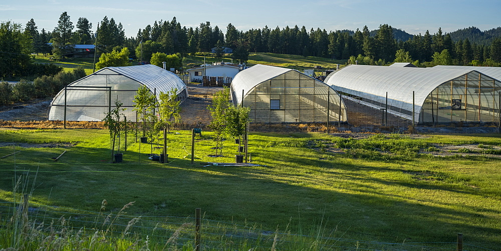 Large greenhouses on a farm; British Columbia, Canada