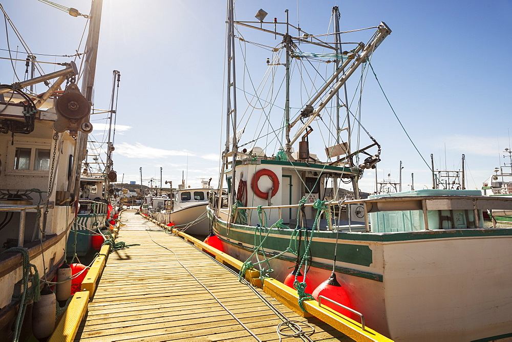 Fishing boats docked in a harbour along a wooden dock on the Atlantic coast; Newfoundland, Canada - 1116-39614