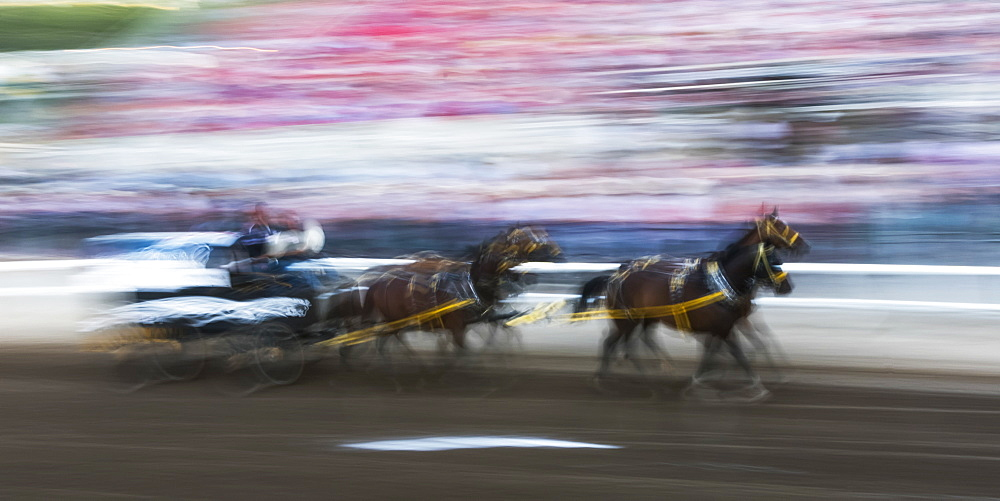 Motion blur of cowboys riding in a carriage behind a team of horses in front of spectators in the stands at the Calgary Stampede, Calgary, Alberta, Canada