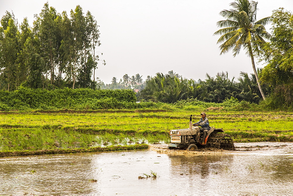 A farmer drives a tractor through a flooded field, Thanh pho Hoi An, Quang Nam, Vietnam