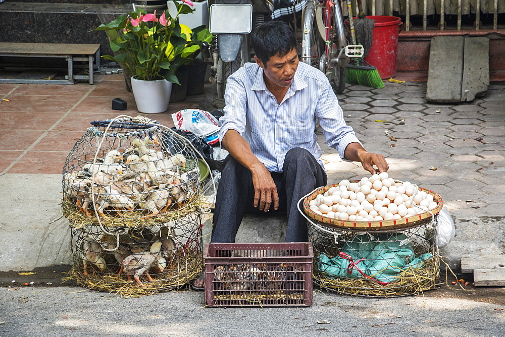 Duck and egg vendor in the Old Quarter, Hanoi, Hanoi, Vietnam