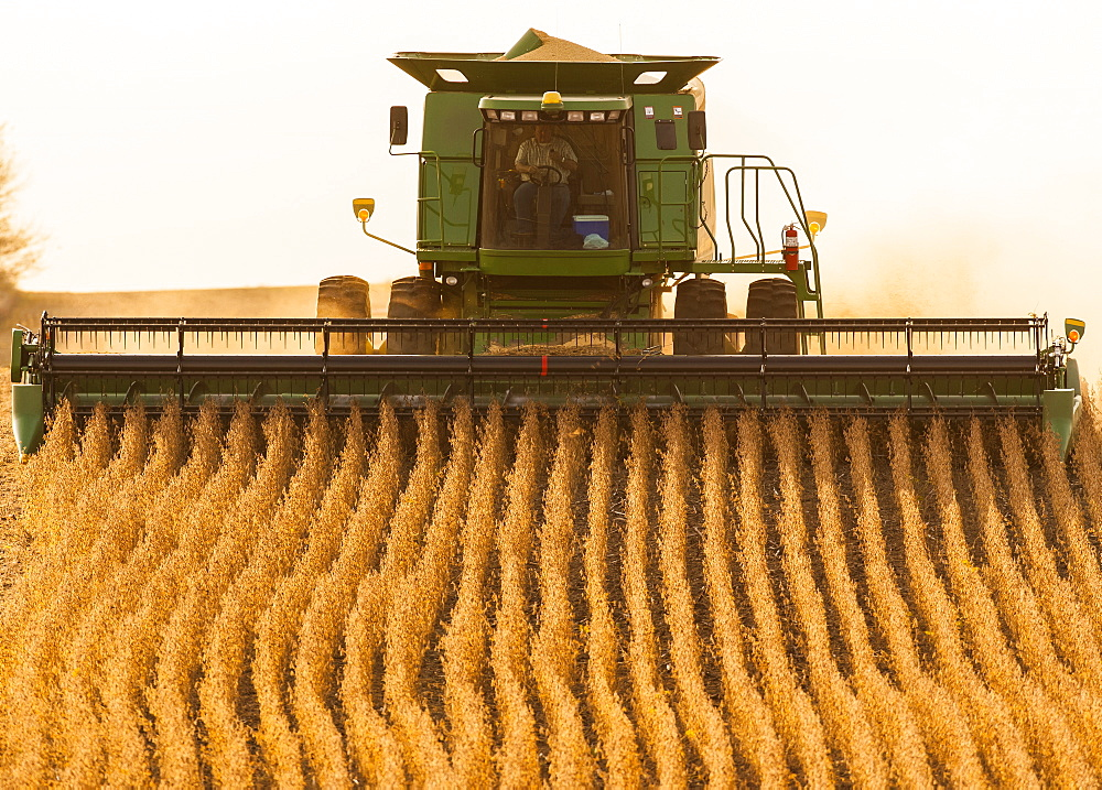 Combine picking beans during soybean harvest, near Nerstrand, Minnesota, United States of America