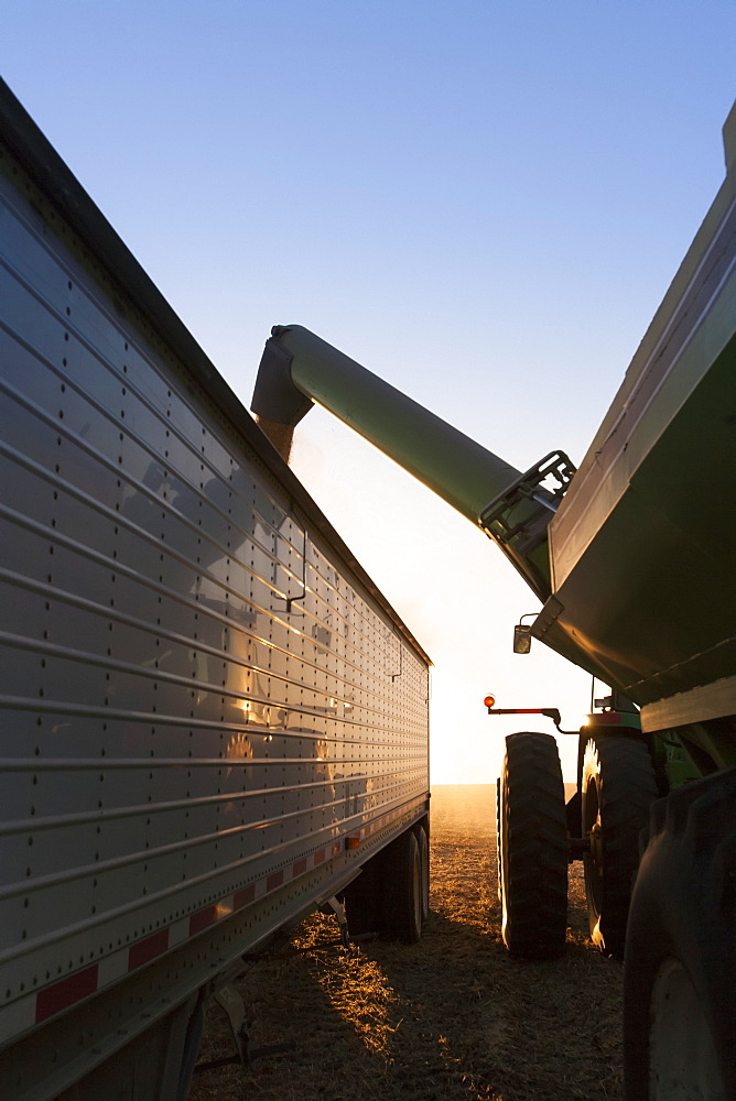 Tractor and grain wagon offloading soybeans into a truck at harvest, near Nerstrand, Minnesota, United States of America
