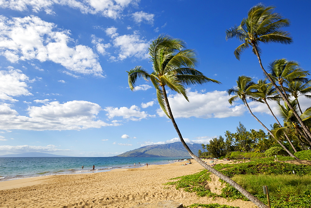 Palm trees lining Kamaole Beach, Kihei, Maui, Hawaii, United States of America