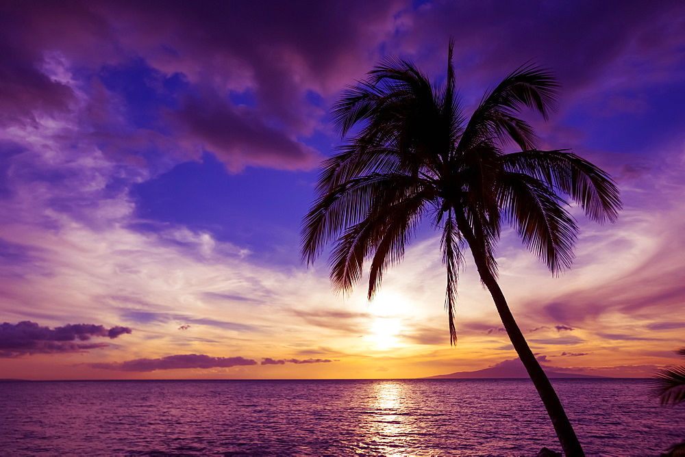 Palm tree at sunset, Kihei, Maui, Hawaii, United States of America