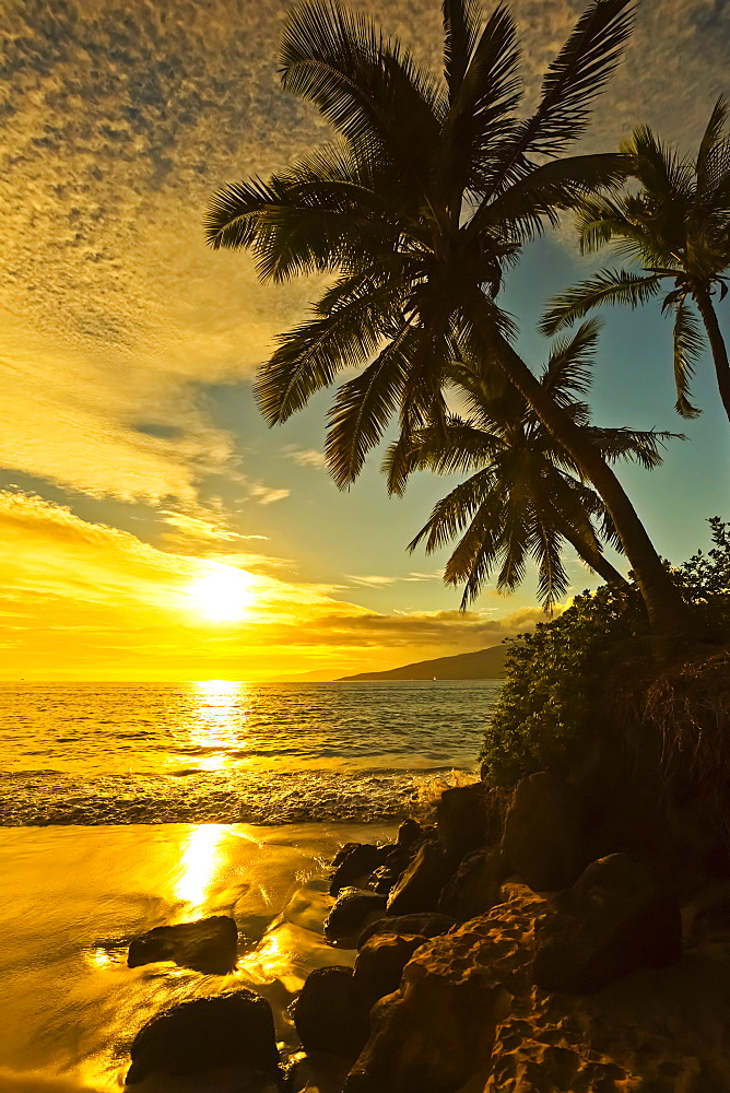 Palm trees at sunset, Kihei, Maui, Hawaii, United States of America