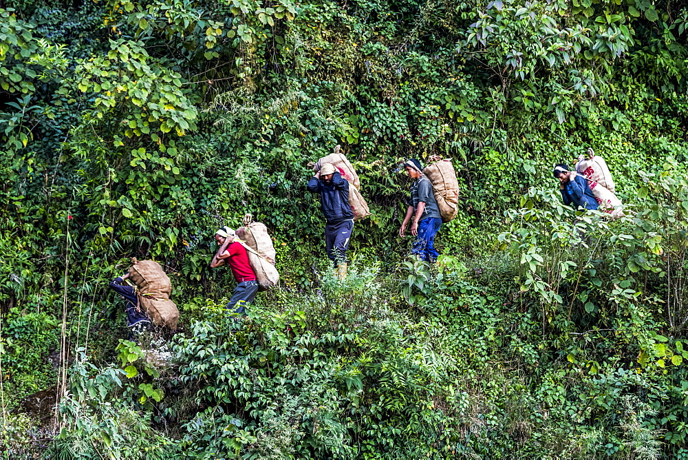 Workers carry large sacks on their backs down a path, Sikkim, India