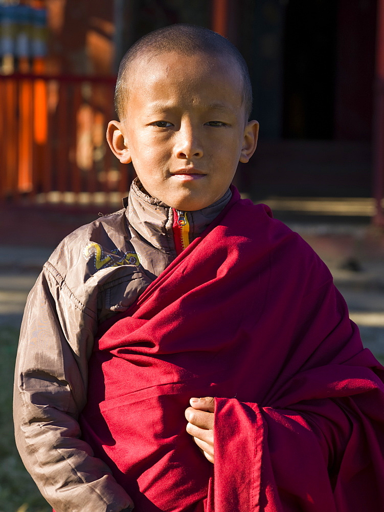 Portrait of a young buddhist monk, Sikkim, India