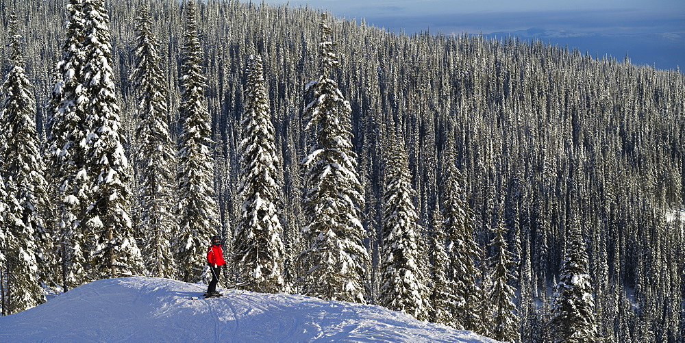 Skier Skier standing with a vast forest behind him, Sun Peaks Resort, Kamloops, British Columbia, Canada