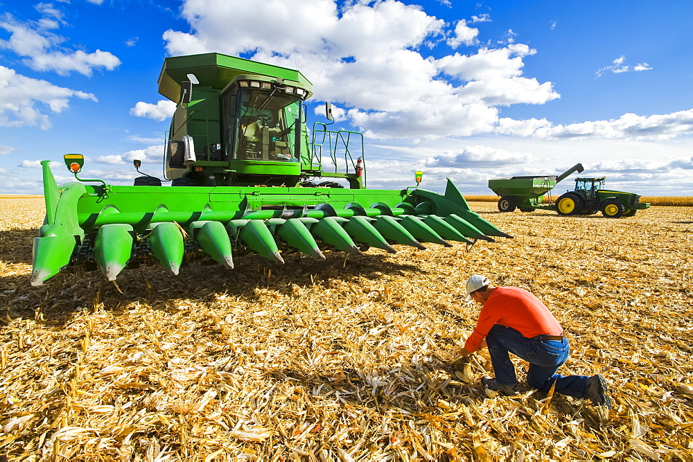 A farmer examines corn residue in front of a combine harvester with a tractor and grain wagon in the background, during the feed/grain corn harvest, near Niverville, Manitoba, Canada