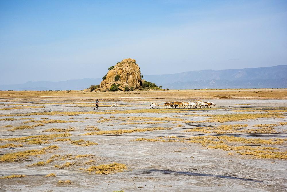 Datoga tribesman herding goats near Lake Eyasi, Tanzania