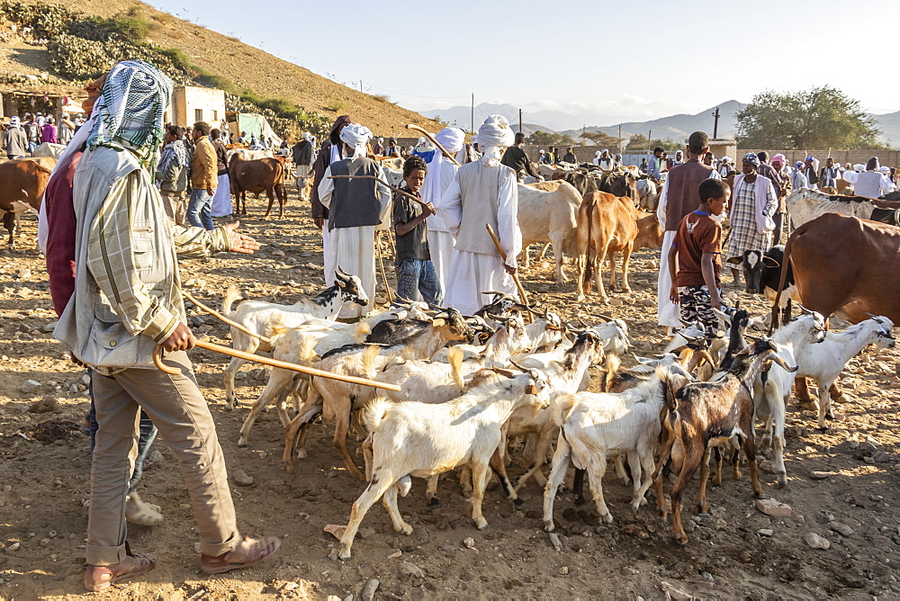 Goat herders with their goats at the Monday livestock market, Keren, Anseba Region, Eritrea