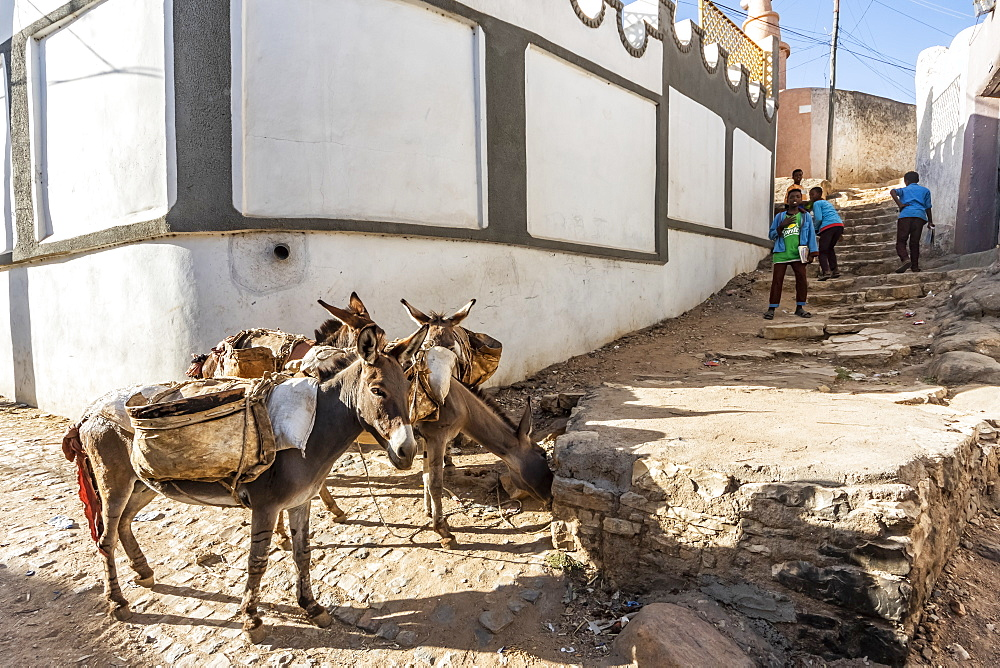 Donkeys on a street in Harar Jugol, the Fortified Historic Town, Harar, Harari Region, Ethiopia