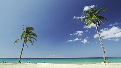 2 Lonely Palms on the Beach, Phuket, Thailand