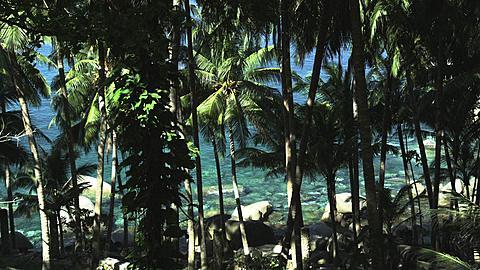 Palms and the Sea at Nakalai Beach, Phuket, Thailand