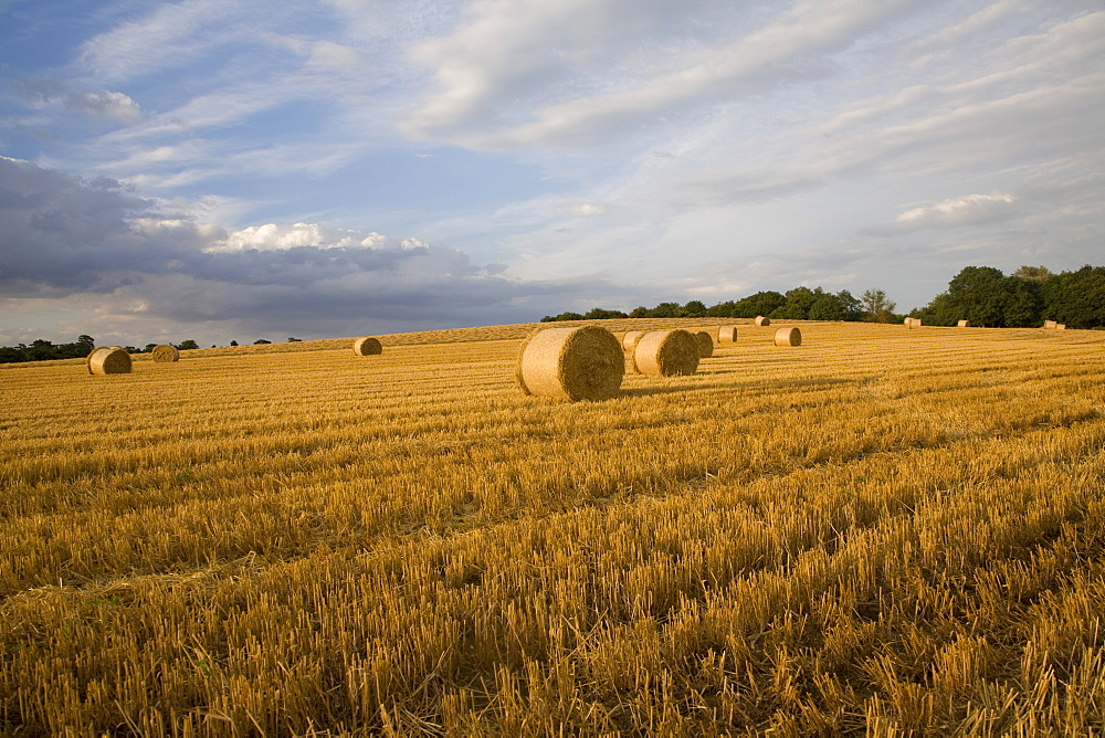 Round straw bales in field of harvested barley, Shottisham, Woodbridge, Suffolk, England, United Kingdom, Europe - 1121-38