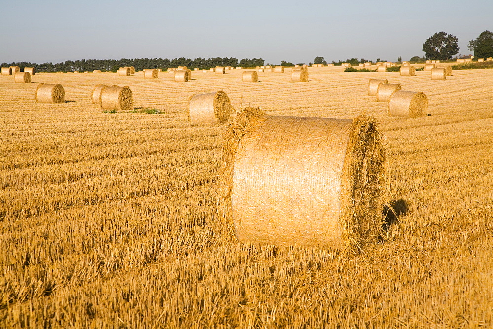 Round straw bales in field, Shottisham, near Woodbridge, Suffolk, England, United Kingdom, Europe - 1121-39