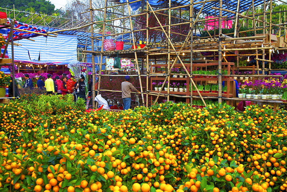 Chinese New Year Flower Market, Hong Kong, China, South East Asia - 1126-1657