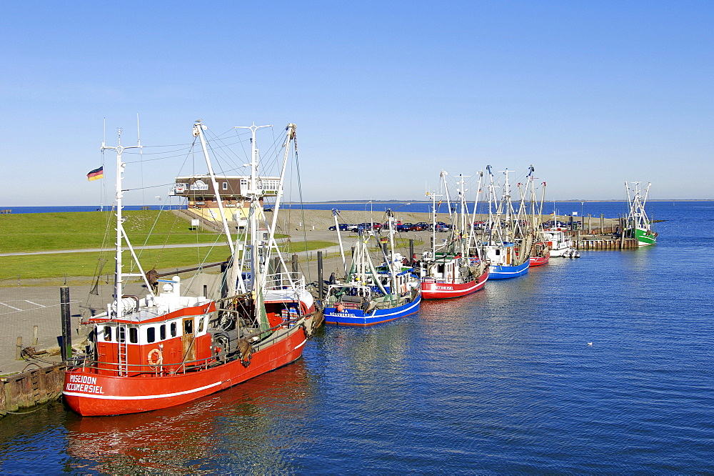 Shrimp cutter in harbour, Accumersiel, Lower Saxony, Germany