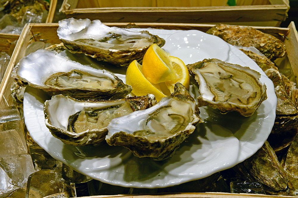 Fresh Oysters with lemon / plate - 1127-17018