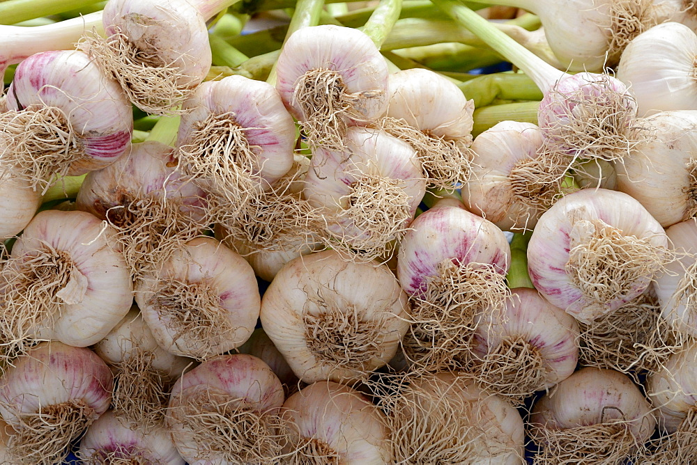 Garlic bulbs /(Allium sativum)