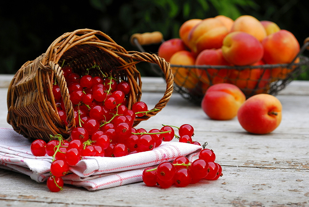 Basket with Red Currant berries and apricots