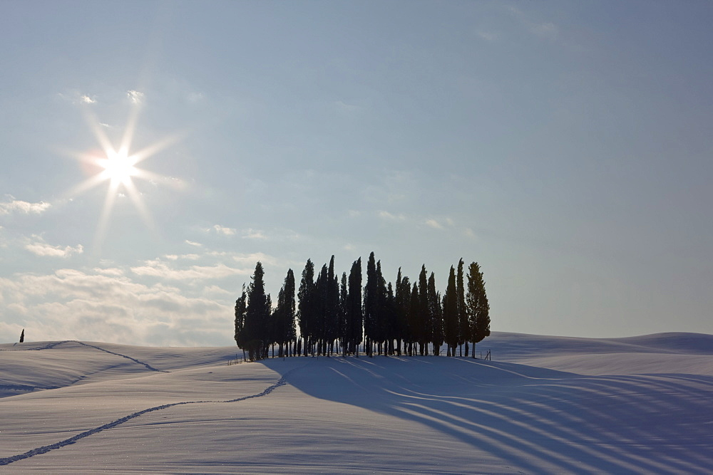Clump of cupressus in wintry landscape, San Quirico, Tuscany, Italy