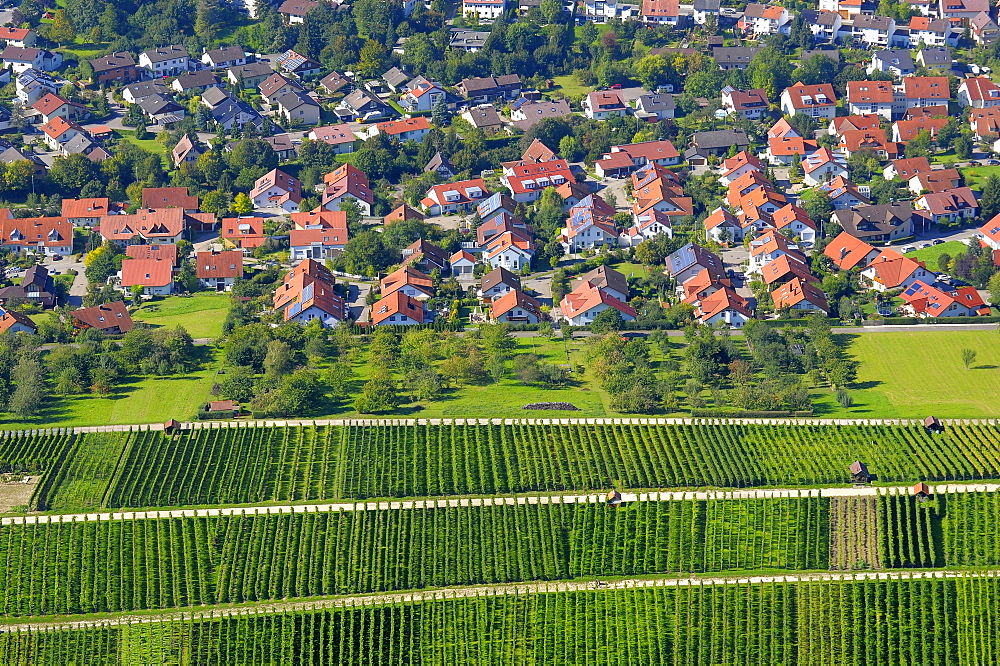 View from Hohenneuffen in Neuffen, vineyards in the late summer, Swabian Alb, Baden-Wuerttemberg, Germany