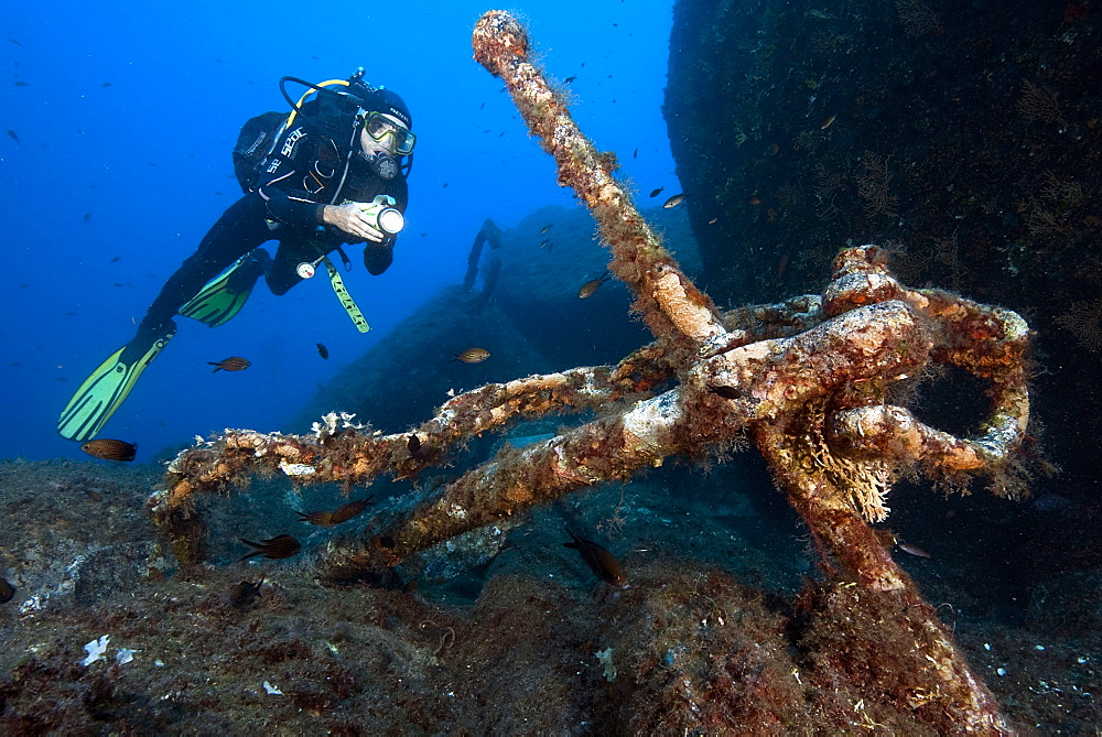 Diver with old anchor, dive spot Le Scole, Giglio island, Tuscany, Italy, Europe / Giglio Porto