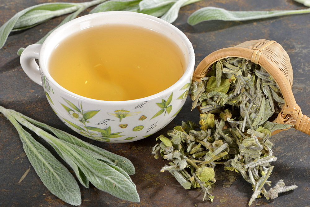 Greek mountain tea / (Sideritis syriaca) / ironwort, mountain tea, shepherd's tea